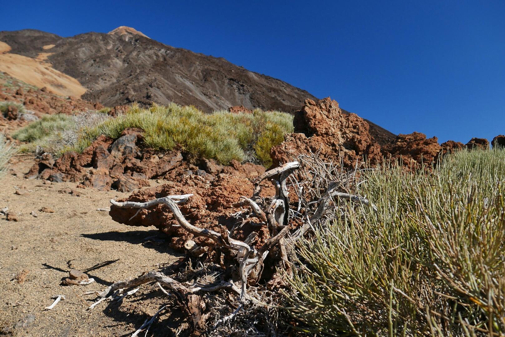 Pico Viejo – dechberoucí trek na Tenerife